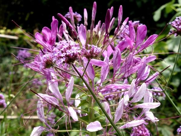 Blumen Samen richtig sammeln Anleitung