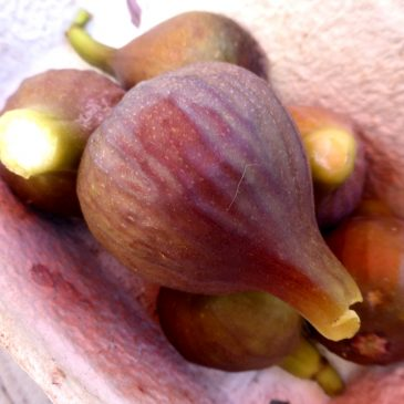 Feigen-Rezepte, die 1.: Würzig-süßer Feigensenf