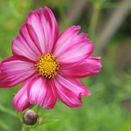 Gartentipps für den Juli: Genuss, geerntet & gesät im Sommergarten