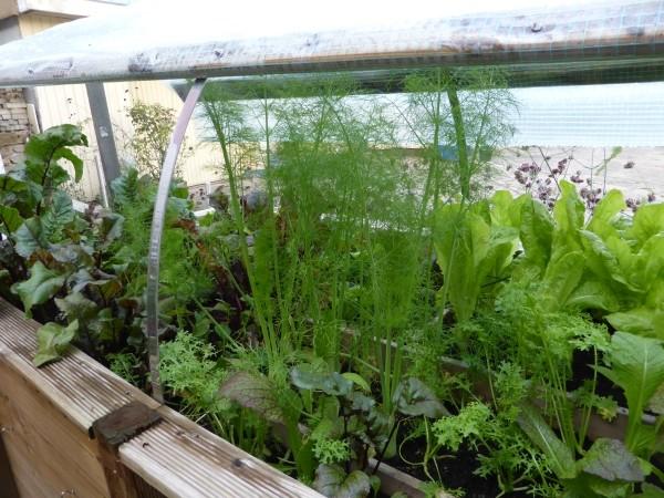 Wintersalat und anderes Gemüse im Hochbeet zum selber bauen