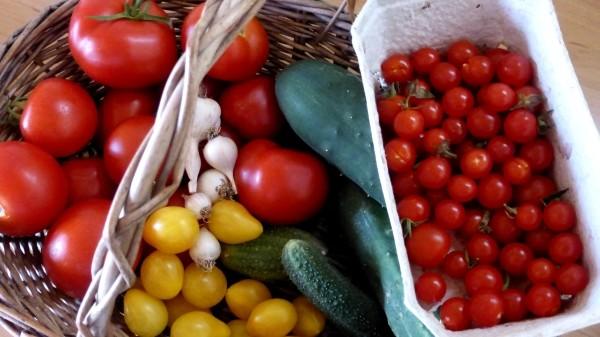 Tipps zur Gartenarbeit von der Anzucht bis zur Ernte