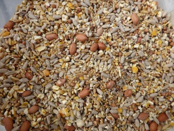 Vögel richtig füttern im Winter und warum Ganzjahresfütterung nachhaltig ist.