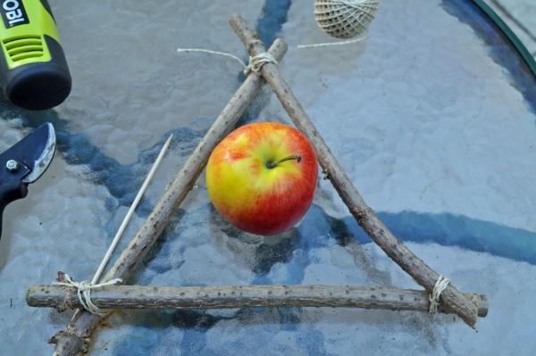 Vögel füttern im Winter: Apfel