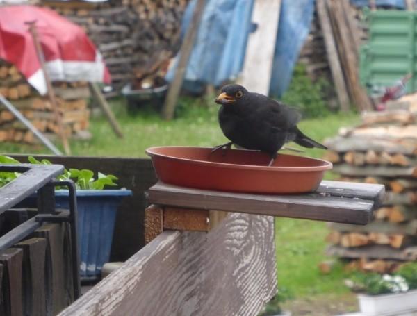 Vögel füttern im Winter und ganzjährig 3 600