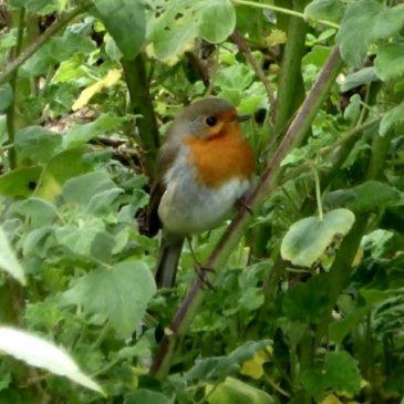 Nicht nur im Winter: Vögel richtig füttern und Artenvielfalt fördern
