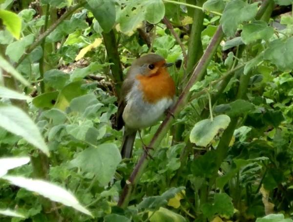 Vögel im Winter und ganzjährig richtig füttern