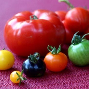 Warum sich ein Topf- oder Balkongarten lohnt: Geliebte Tomaten