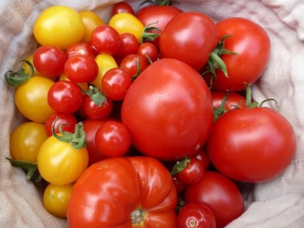 tomaten aus samen selber ziehen eine anleitung und ein. Black Bedroom Furniture Sets. Home Design Ideas