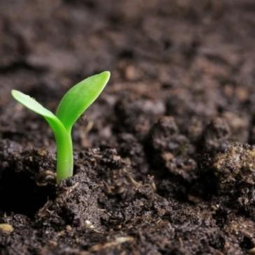 Aussaatkalender für den März: Die Balkon- und Gartensaison startet durch