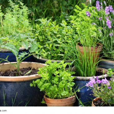 pflanzerde oder blumenerde selber machen umweltfreundlich und g nstig. Black Bedroom Furniture Sets. Home Design Ideas