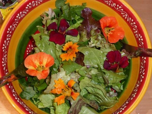 Schöner Sommersalat; Juli im Garten und Balkon