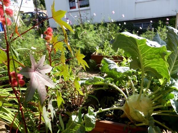 Garten Und Balkon Im September: Aussaat, Ernten Und Verarbeiten Garten Im September Pflege Tipps