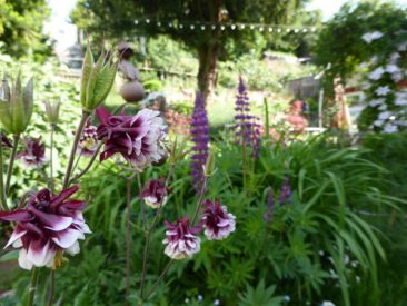 Gemüse und Blumen dominieren den Bauerngarten, der zunächst durch Zwiebelblumen im Frühjahr erwacht, gefolgt oder begleitet etwa von Fingerhut oder Akelei.