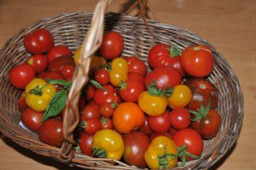 Aber auch Tomaten,