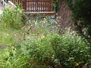 Hier verjüngt sich ein ebenfalls erst später angelegtes Blumenbeet zu einer Rabatte den Zaun entlang, an dessem vorderen Ende dieses Jahr testweise Mais wuchs.