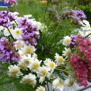 Gartenarbeit im Oktober: Ausklang der Gartensaison und letzte Aussaat