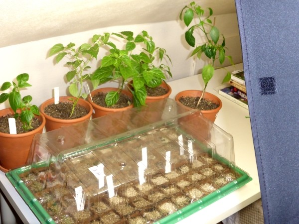 LED Pflanzenlampen, Pflanzenleuchten und mehr zur Anzucht