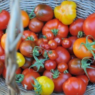 Gartentipps für den Juli: Genuss, geerntet & gesät