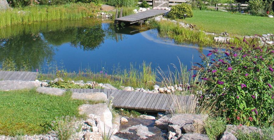 Gartenteich, Schwimmteich oder Naturpool, so schön wie wertvoll