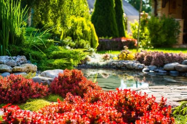 Idealerweise ist das Ufer des Gartenteichs so bepflanzt, dass das kleine Gewässer über viele Monate attraktiv begrünt ist.