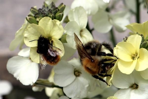 Bienensterben, Artensterben, Vogelsterben, Pestizide, Glyphosat