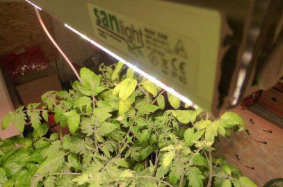 Nie mehr ohne: Anzuchtlampen für Tomate, Paprika & Co. im Test
