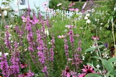 Rettet den Vorgarten oder warum Grau nicht das neue Grün sein darf