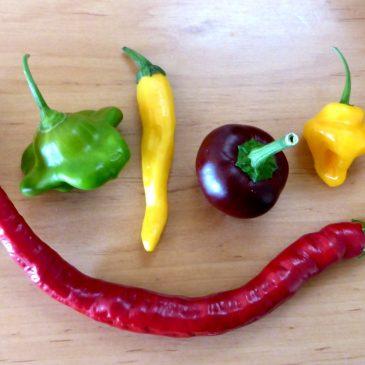 Paprika und Chili säen: Wann, Schritt-für-Schritt-Anleitung und Pflege