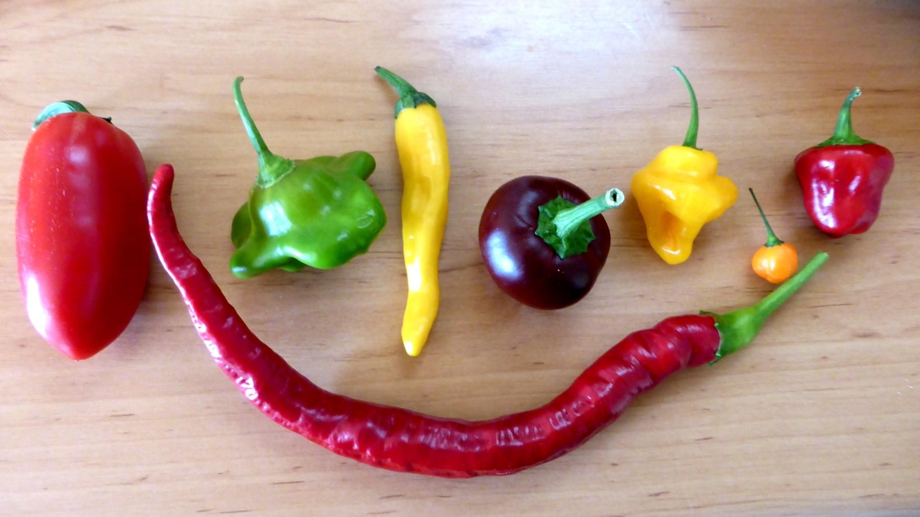 Chili und Paprika: Aussaattermin, Anzucht, Pflege, Standort und überwintern