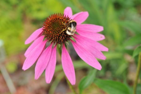 Mit den richtigen Blumen die Artenvielfalt auf dem Balkon und im eigenen Garten fördern