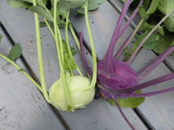 Warum (Topf- und Balkon-)Gärtner gesünder leben