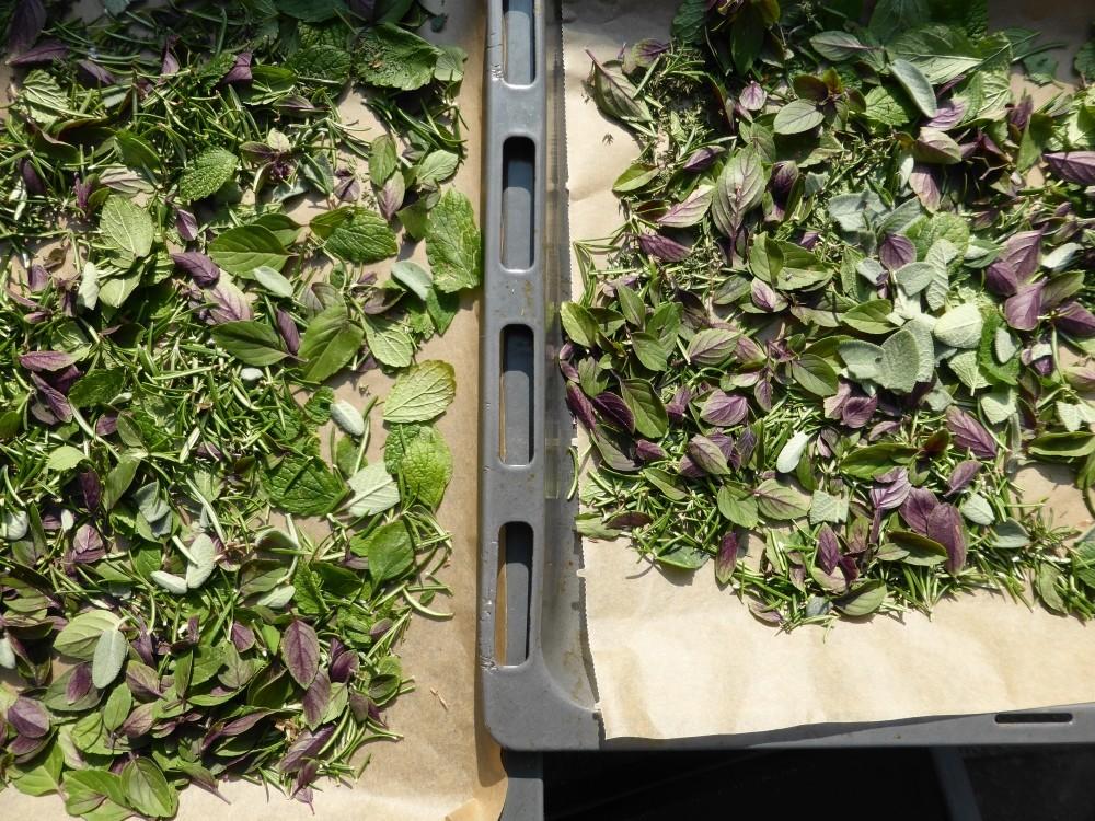 Für den Wintervorrat: Duftende Kräuter richtig trocknen