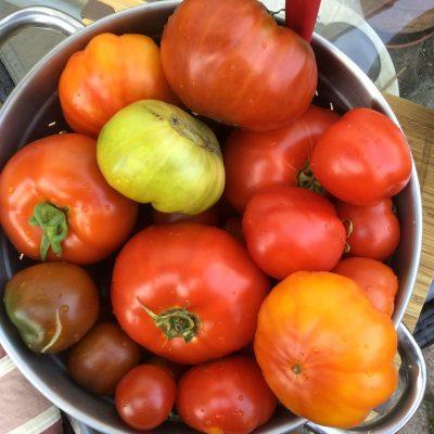 Man nehme zum Einkochen von Tomaten eine entsprechende Menge der Früchte...