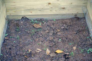 Wühlmausschutz: Hasendraht. Lückenlos auslegen, etwa 10 Zentimeter an allen Seiten mehr einplanen und am Holz etwa mit Grampen fixieren.