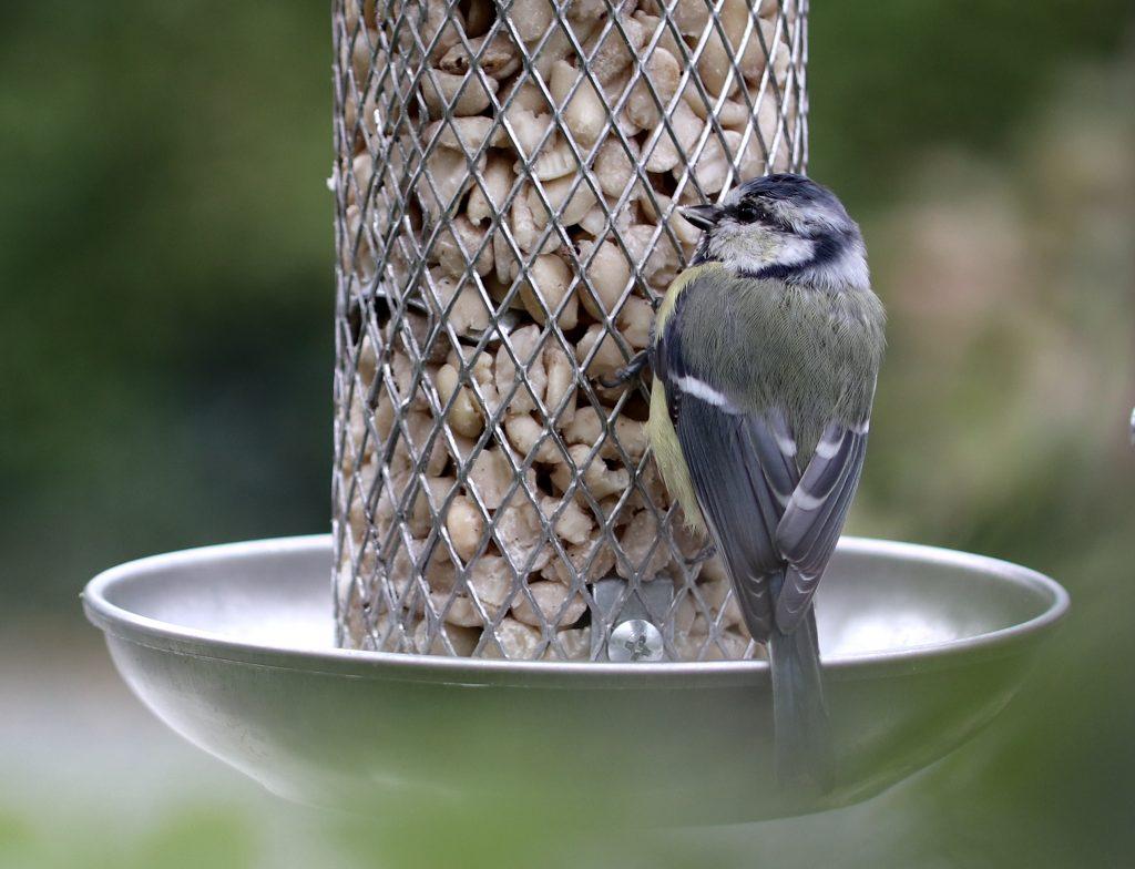 Vögel ganzjährig füttern dient dem Arterhalt.