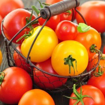 """Tomaten selber ziehen: Ein """"Tagebuch"""" von der Aussaat bis zur Pflanzung"""