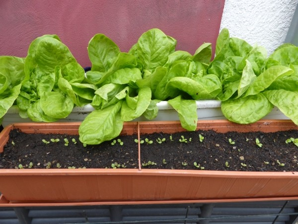 Garten und balkongarten einfache tipps aus der praxis - Garten anfanger ...
