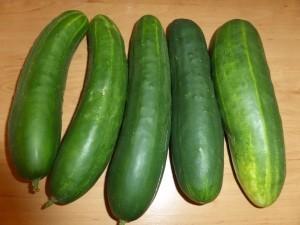 Das beste Gemüse für Anfänger, wenn man wenig Zeit hat und den Balkonggarten: Die Gurke, am besten Anfang April selbst aus Samen gezogen, gehört dazu.