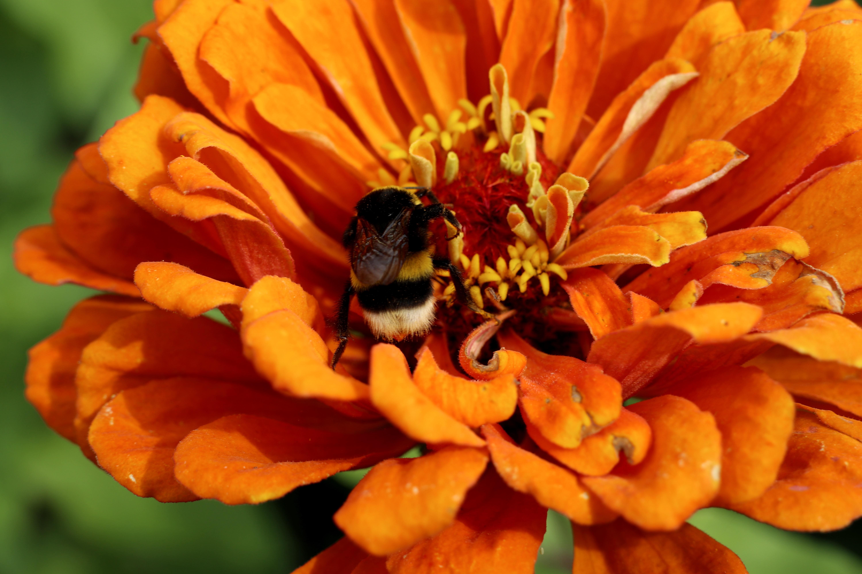 Sommerblumen Stauden Und Pflanzen Für Bienen Säen Anleitung Und Wann