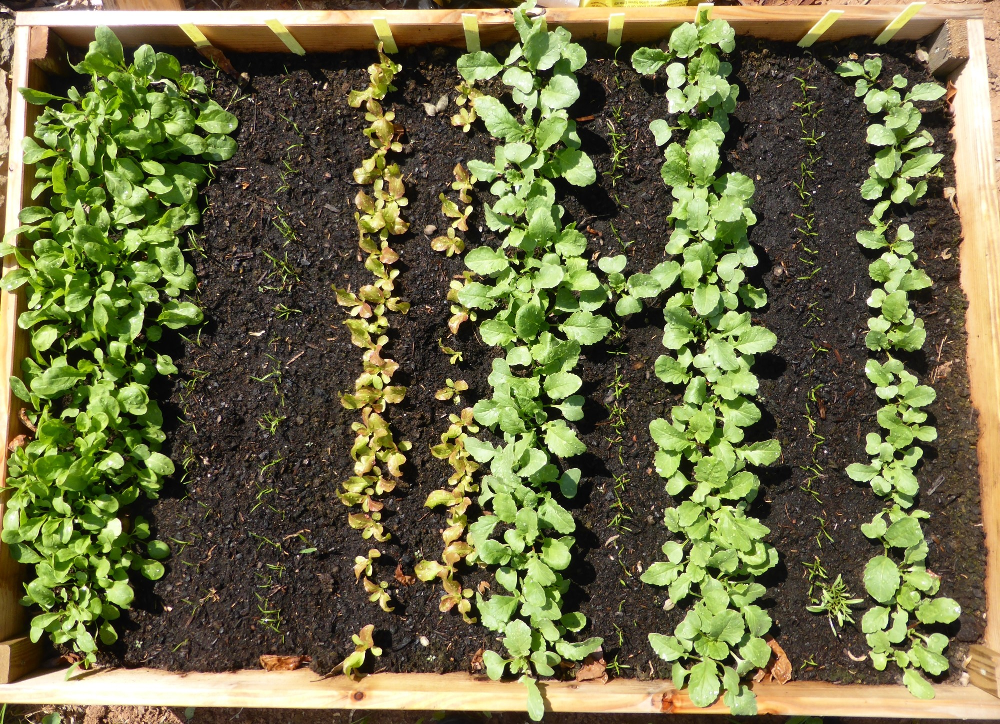 Garten, Balkongarten, Topfgarten: Tipps wie Hochbeet bauen und optimal nutzen