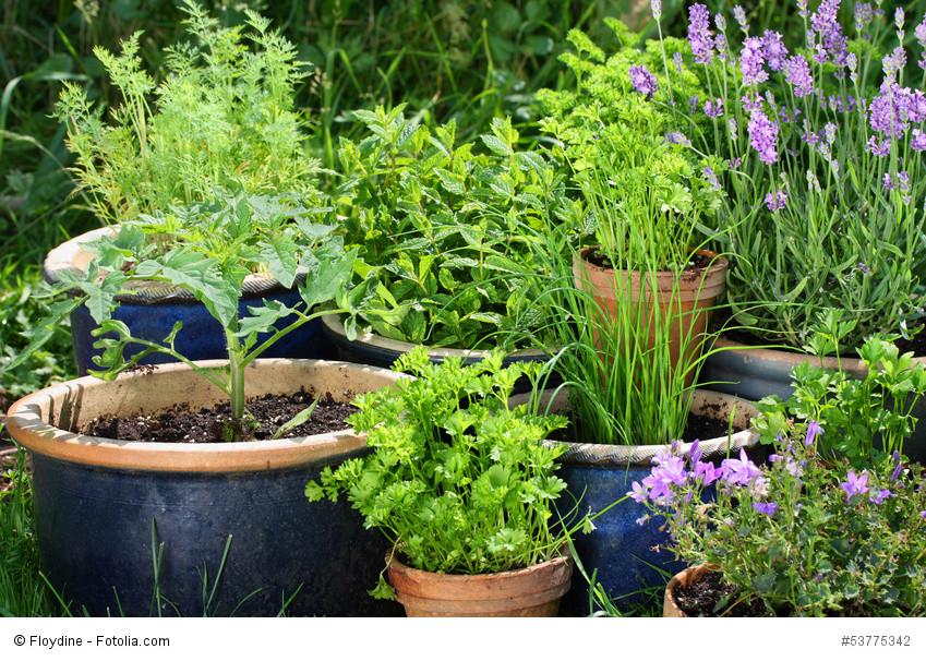 Urban gardening - Gemüse und Kräuter in Töpfenund wie man richtig umtopft und eintopft