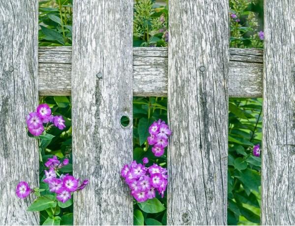 Holz im Haus, Garten oder auf dem Balkon natürlich pflegen