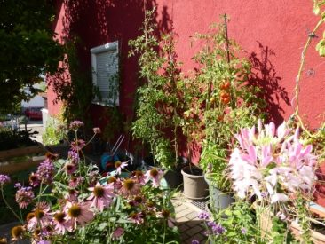 Balokon und Garten im September