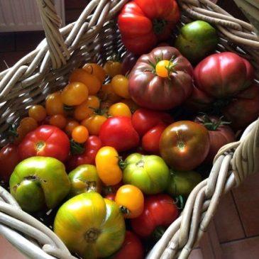 Der Garten im August: Ernten, pflegen, aussäen und verarbeiten