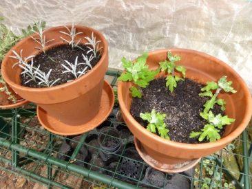 Anleitung, um durch Stecklinge Pflanzen zu vermehren