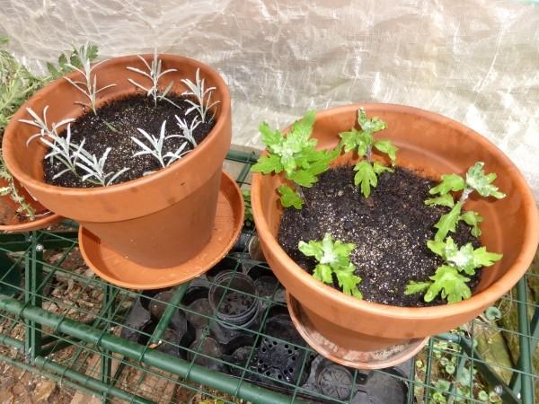 Kostenlos Und Einfach Pflanzen Aus Stecklingen Ziehen Eine Anleitung