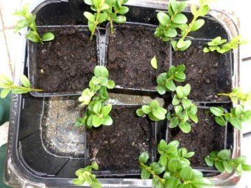 kostenlos und einfach pflanzen aus stecklingen ziehen eine anleitung. Black Bedroom Furniture Sets. Home Design Ideas