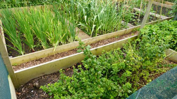 Einen Bauerngarten Oder Cottagegarten Anlegen Schritt Fur Schritt