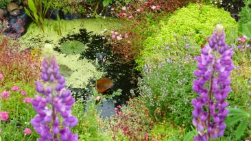 Beliebt bei allen GArten- und Zaungästen: Eine vom Ufer aus leicht begehbare Wasserstelle in From eines Teichs.