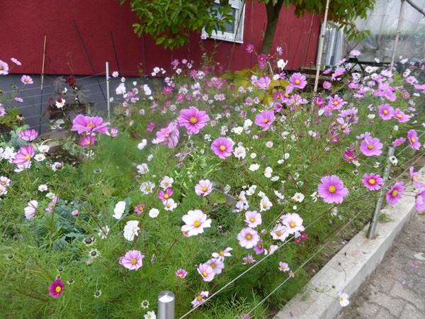 Garten und balkongarten einfache tipps aus der praxis for Garten anlegen plan